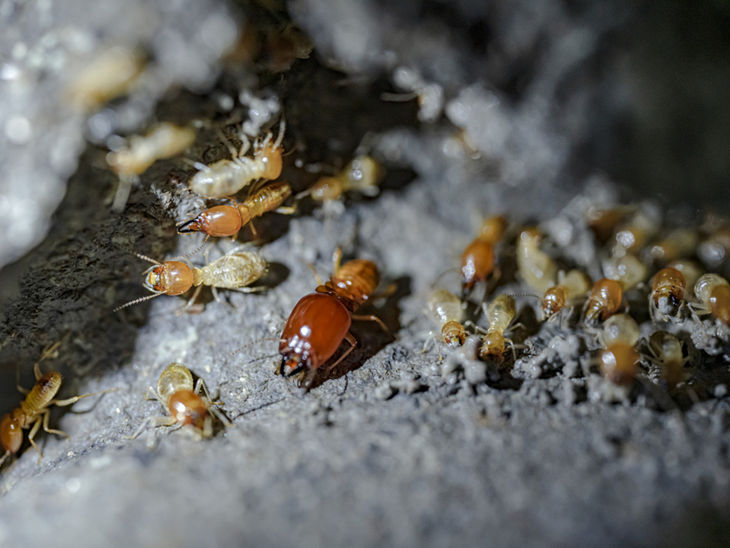 Termite Extermination in Raytown & Kansas City, MO, Johnson County & Overland Park, KS
